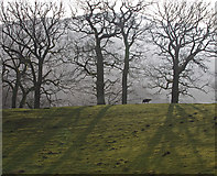 NY3915 : Sheep and trees, Patterdale by Ian Taylor