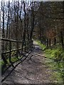 SO1603 : Footpath through the woodlands, Hollybush by Robin Drayton