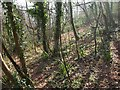 SX9363 : Lincombe Slopes by Derek Harper