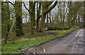 SD6234 : Hothersall Lane by Ian Greig