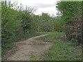 TQ6981 : Footpath signpost in Stanford Warren Nature Reserve, Mucking by Roger Jones