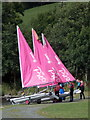 SH9235 : Bala: three pink sails by Chris Downer