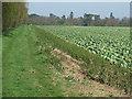 TM2847 : Cabbages And Footpath by Keith Evans