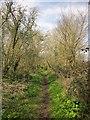 ST5476 : Path, Three Acre Covert by Derek Harper