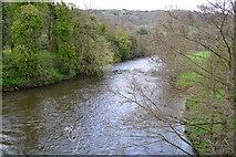 SK3057 : River Derwent below Cromford Bridge by David Martin