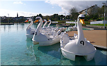 J5082 : The 'Pickie Swans', Bangor by Rossographer