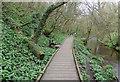 SE9887 : Boardwalk beside the River Derwent by Pauline E