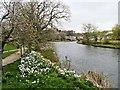 NY1130 : River Derwent, Cockermouth by David Dixon