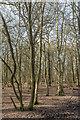 TQ2897 : Trent Park, Cockfosters, Hertfordshire by Christine Matthews