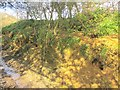 ST4401 : Rabbit warren, Lewesdon Hill Lane by Derek Harper