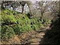 ST4401 : Wessex Ridgeway by Derek Harper