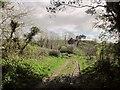 ST4401 : Wessex Ridgeway approaching Stoke Knapp by Derek Harper