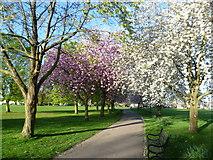 TQ4375 : Springtime in Eltham by Marathon
