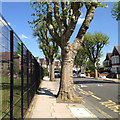 TQ3773 : East on Penerley Road, Catford by Robin Stott