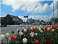TF5282 : Tulips in Sutton on Sea by Steve  Fareham