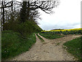 TM4089 : Footpath off the B1062 Bungay Road by Adrian Cable