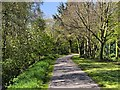 SD4214 : Martin Mere WWT Centre, Path Towards Ron Barker Hide by David Dixon