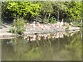SD4314 : Chilean Flamingos, Martin Mere WWT Centre by David Dixon