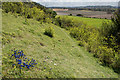 TQ2252 : Above the North Downs Way by Ian Capper