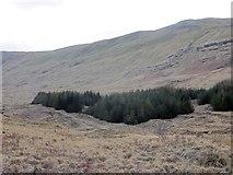 NM6231 : Woodland edge, Glen More by Richard Webb