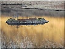 NM6330 : Island, Loch Sguabain by Richard Webb