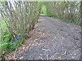 TQ4562 : Looking along Snag Lane by Marathon