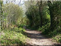 SU8415 : Track east of Staple Ash Farm by Chris Gunns