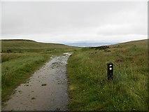 C6830 : Wet path, Binevenagh by Richard Webb