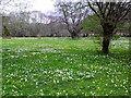 NR8695 : Wildflower meadow at Sandgate by sylvia duckworth