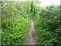 TQ4362 : A quiet footpath in Bromley by Marathon