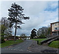 ST3091 : Tall tree at the eastern end of Blackett Avenue, Newport by Jaggery