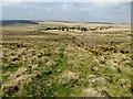SD6516 : Moorland at Will Narr by Philip Platt