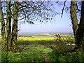 SU3684 : Another Ridgeway View by Des Blenkinsopp