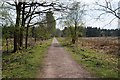 SO6313 : Cycle track near Crabtreehill Plantation by Philip Halling
