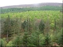 NY2427 : Shades of green, Longside Wood by Christine Johnstone