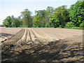 TG3726 : Cultivated field by Moat Hill Plantation by Evelyn Simak