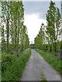 SK6731 : Poplar avenue, Vimy Ridge Farm drive by Alan Murray-Rust