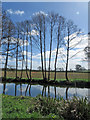 SE7086 : Slim trees by the River Dove, Keldholme by Pauline E