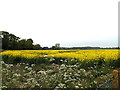 TM3183 : Farmland near St.Margaret South Elmham Telephone Exchange by Adrian Cable