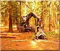 SU9768 : Tree harvesting machine near Virginia Water by Phillip Williams