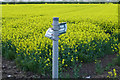 SK5629 : Footpath signs in a rape field by David Lally