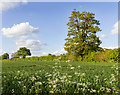 TM1782 : Fields north of Harvey Lane by David P Howard