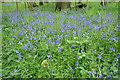 SU0898 : Bluebells beside a 'Public Path' by Philip Halling