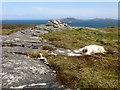 NF7106 : Orasaigh, Tidal Island by Rude Health