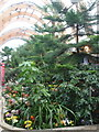 SK3587 : Sheffield: inside the Winter Garden by Chris Downer