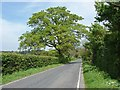 TQ0552 : Hedgerow oak by Alan Hunt