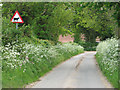 TG3109 : Cow parsley beside Witton Lane by Evelyn Simak