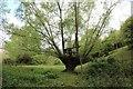 SO7837 : Treehouse, Castlemorton by Bob Embleton