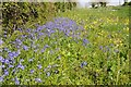 SP0904 : Bluebells and cowslips by Philip Halling