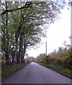 NO8999 : Beeches by minor road by Stanley Howe